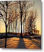 Silhouette Of Trees And Ice Metal Print