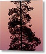 Silhouette Tree At Sunrise Metal Print