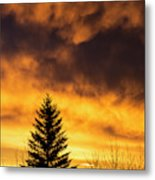 Silhouetted Evergreen Tree Metal Print