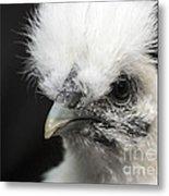Silkie Chicken Portrait Metal Print