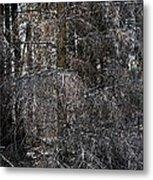 Silver Cedar Metal Print