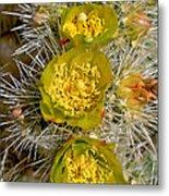 Silver Cholla Cactus Metal Print