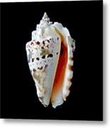 Silver Conch Seashell Metal Print