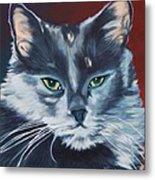 Silver Grey Cat Portrait Metal Print