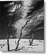 Silver Lake Dune With Dead Trees And Cirrus Clouds In Black And White Metal Print