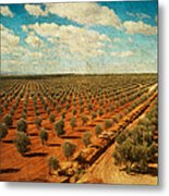 Silver Olive Trees In Andalusia. Spain Metal Print