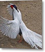 Silver Pheasant Metal Print