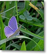 Silver Studded Blue Butterfly Metal Print