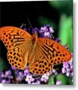 Silver Washed Fritillary Butterfly Metal Print