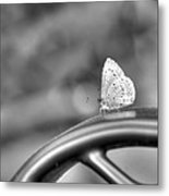 Silver White Butterfly Metal Print
