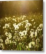 Simple Dreams Metal Print