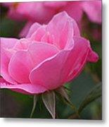 Simplicity Floribunda Rose Metal Print