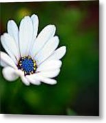 Simply Beautiful Metal Print by Tammy Smith