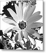 Simply Black And White Metal Print