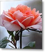 Simply Rose  Metal Print
