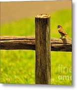 Singing Bird Metal Print by George Paris