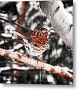 Singing In The Snowfall Metal Print