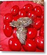 Singing Over Red Eggs Metal Print