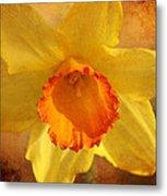 Single Daffodil Metal Print