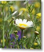 Single Daisy In A Field Metal Print