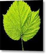 Single Leaf From Raspberry Bush Metal Print