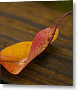 Single Leaf Metal Print