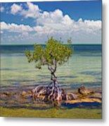 Single Mangrove Tree In The Gulf Metal Print