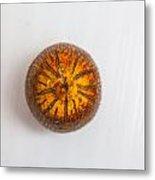 single pejibaye Peach palm Metal Print