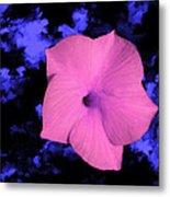 Single Pink Cactus Flower Metal Print