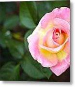 Single Pink Rose Metal Print