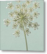 Single Queen Anne's Lace Metal Print