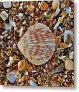 Single Shell Hatteras Island 17 9/3 Metal Print