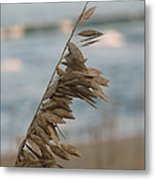 Single Strand Beachgrass Metal Print