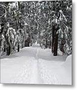 Single Track Cross Country Skiing Trail Yosemite National Park Metal Print