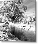 Single Tree Aginst The Sun Metal Print
