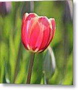 Single Tulip Metal Print