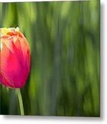 Single Tulip Flower On Green Background Metal Print