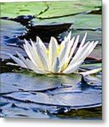 Single White Lotus Metal Print