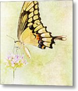 Sipping Nectar Metal Print