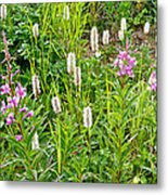 Sitka Burnet And Tall Fireweed In Katmai National Preserve-ak Metal Print