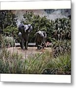 Sitting By The Elephants Metal Print