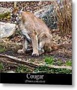 sitting Cougar Metal Print
