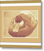 Sitting Duck Metal Print