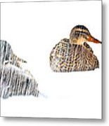 Sitting Ducks In A Blizzard Metal Print