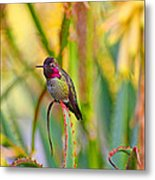 Sitting In The Succulents Metal Print