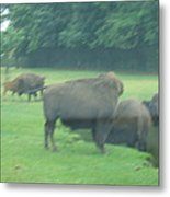 Six Flags Great Adventure - Animal Park - 121214 Metal Print