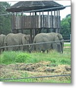 Six Flags Great Adventure - Animal Park - 121224 Metal Print by DC Photographer