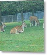 Six Flags Great Adventure - Animal Park - 121234 Metal Print