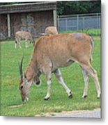 Six Flags Great Adventure - Animal Park - 121235 Metal Print