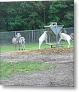 Six Flags Great Adventure - Animal Park - 121247 Metal Print